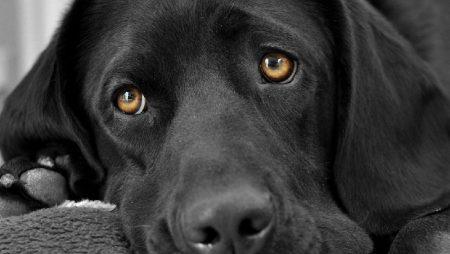 Importer vos animaux domestiques en Israël